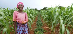 The Untold Success Story: Agroecology in Africa Addresses Climate Change, Hunger, and Poverty