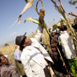 AGRA: helping agribusiness conquer African agriculture?